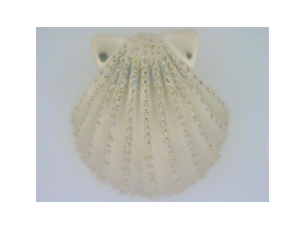Pendant - Ladies 14 karat yellow gold scallop shell slide/pendant.  This shell pendant features a satin finish with beaded detail and high polished accents.  The pendant measures 1.00 inch in length with a hidden bail and weighs 6.00 grams.